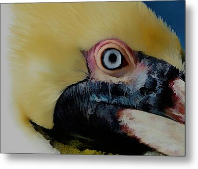 Metal Print featuring the photograph Pelican Up Close by Pamela Blizzard