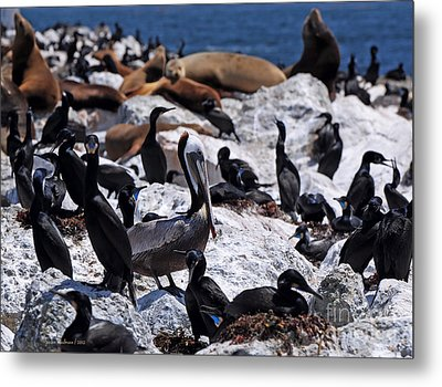 Metal Print featuring the photograph Pelican Visitor by Susan Wiedmann