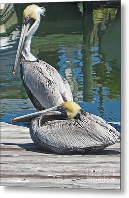 Pelicans At Rest Metal Print by Joan McArthur