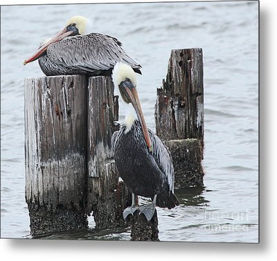 Pelicans Enjoying Lake Ponchartrain Metal Print