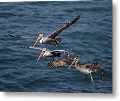 Pelicans In Flight Metal Print