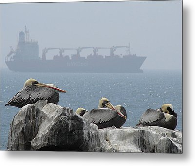 Pelicans In The Mist Metal Print by Ramona Johnston