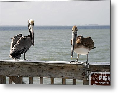 Pelicans On The Pier At Fort Myers Beach In Florida Metal Print by William Kuta