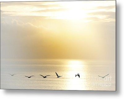 Pelicans Over Malibu Beach California Metal Print by Artist and Photographer Laura Wrede