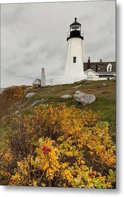 Pemaquid Point Lighthouse And Sea Roses Metal Print by David Smith