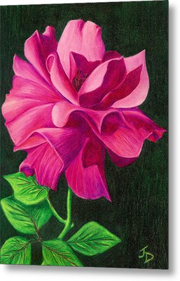 Metal Print featuring the drawing Pencil Rose by Janice Dunbar