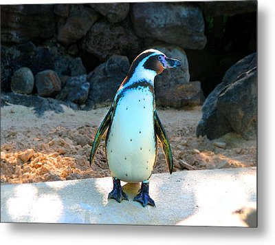 Metal Print featuring the photograph Penguin by Kristine Merc