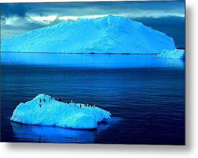 Penguins On Iceberg Metal Print