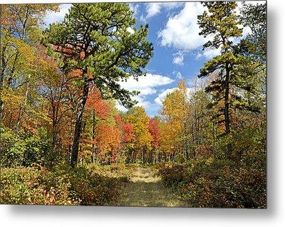 Pennsylvania Forest In Autumn Pocono Mountains Metal Print
