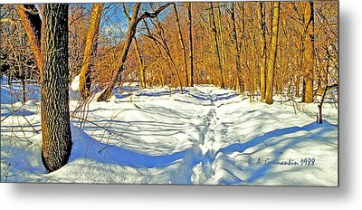 Metal Print featuring the photograph Pennsylvania Forest In Winter by A Gurmankin
