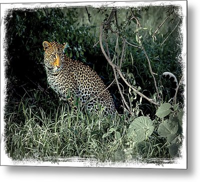 Pensive Leopard Metal Print