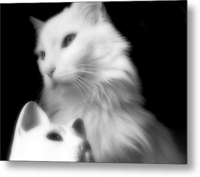 Metal Print featuring the photograph Pensive Turkish Angora by Aurelio Zucco