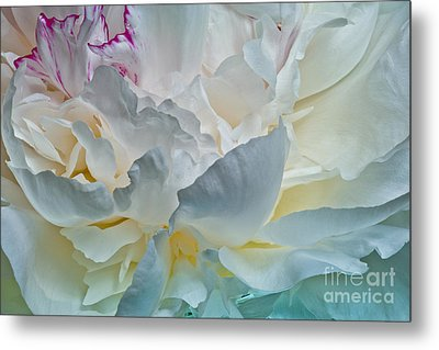 Peonie 2012 Metal Print by Art Barker
