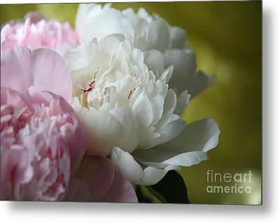 Metal Print featuring the photograph Peonies by Lynn England