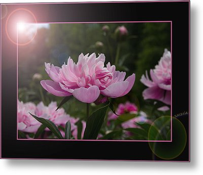 Metal Print featuring the photograph Peony Garden Sun Flare by Patti Deters