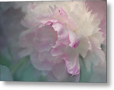 Peony Metal Print by Jeff Burgess