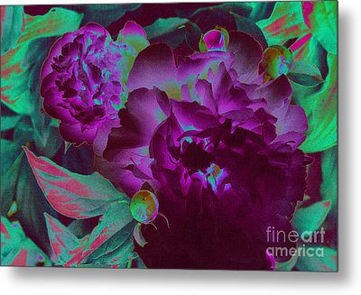 Peony Passion Metal Print by First Star Art