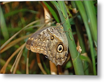 Perched Metal Print by Aimee L Maher Photography and Art Visit ALMGallerydotcom