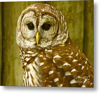 Metal Print featuring the photograph Perched by Alice Mainville