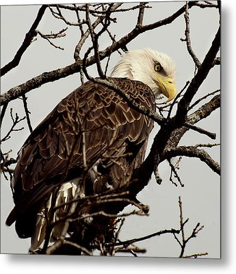 Perched On High Metal Print by Thomas Young