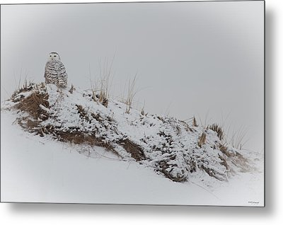 Perched Snow Owl Metal Print