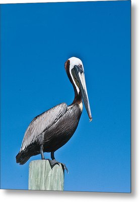 Perched Wil 391 Metal Print