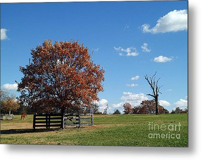 Percy Warner Park Metal Print by Jeff Holbrook
