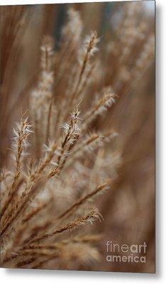 Perennial Grass Metal Print by Arlene Carmel