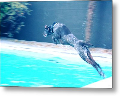 Perfect Form Of A Rocket Dog Metal Print by Carolina Liechtenstein