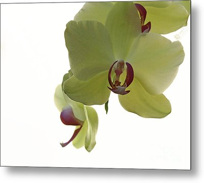 Perfect Moments Orchid  Metal Print by Inspired Nature Photography Fine Art Photography