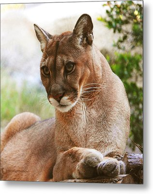 Perfect Panther Metal Print by DiDi Higginbotham