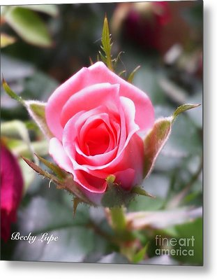 Perfect Rosebud In True Color Metal Print by Becky Lupe
