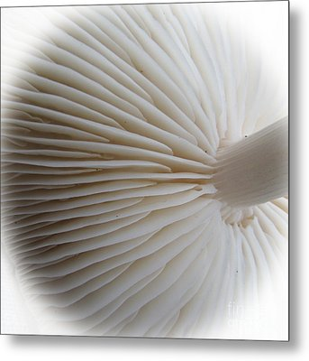 Perfect Round White Mushroom Metal Print by Tina M Wenger