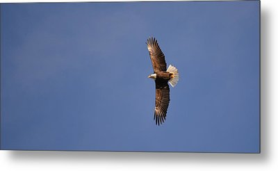 Perfected Flight Metal Print