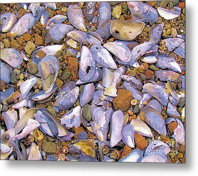 Periwinkles Muscles And Clams Metal Print