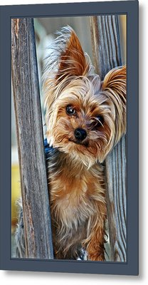 Perky Pup Metal Print by Donna Proctor
