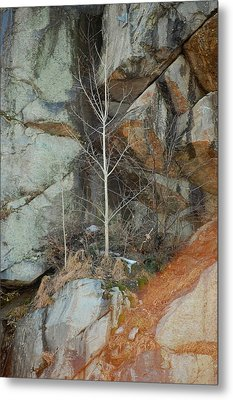 Metal Print featuring the photograph Perseverance by Mim White