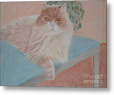 Persian Cat Metal Print by Cybele Chaves