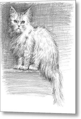 Persian Cat Metal Print by Sarah Parks