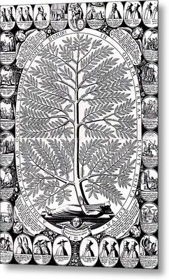 Peruvian Bark Or Jesuit Tree Metal Print