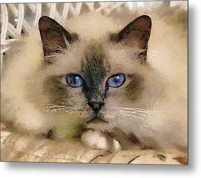 Pet Cat Metal Print