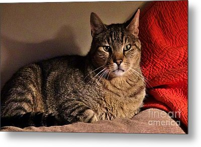 Pet Portrait - Max The Cat Metal Print