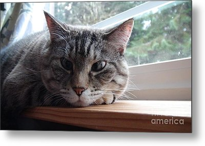 Metal Print featuring the photograph Pet Portrait - Lily The Cat by Laura  Wong-Rose
