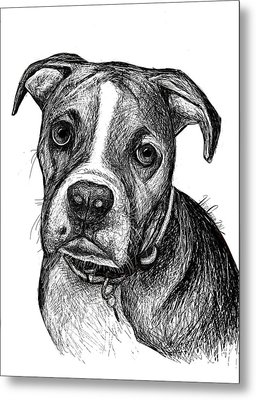 Pet Portraits Boxer Metal Print by Heidi Creed