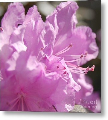 Petal Pink By Jrr Metal Print by First Star Art