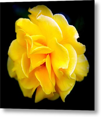 Petals And Lace Metal Print by Karen Wiles