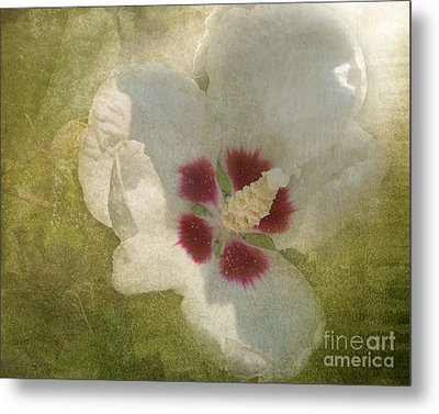 Metal Print featuring the photograph Petals In Shadows by Kathi Mirto