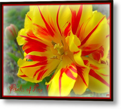 Metal Print featuring the photograph Petals Of Fire by Heidi Manly