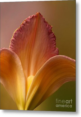 Metal Print featuring the photograph Petals Of Lily by Kathi Mirto