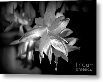 Petals Of Silver Metal Print by Linda Prewer